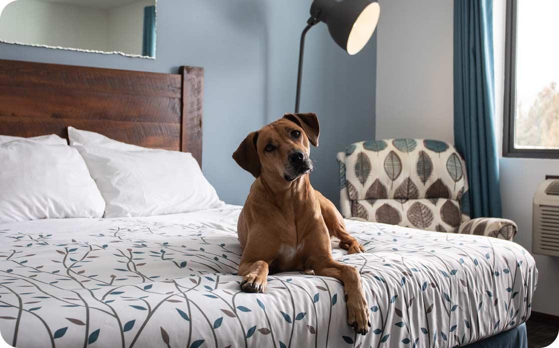 Dog-Friendly Hotel Room in Door County - Open Hearth Lodge